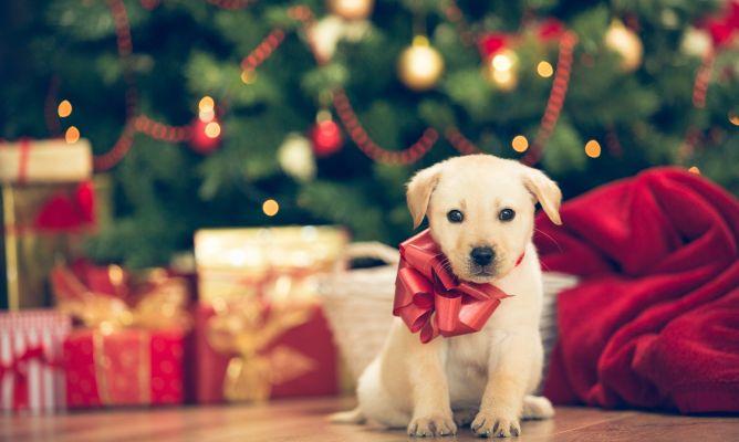 Regalar una mascota por Navidad